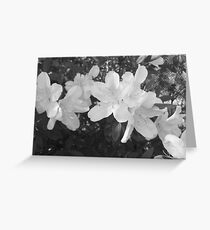 Blooming Azaleas Greeting Card