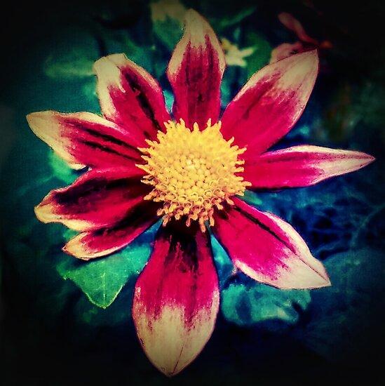 Dahlia Flower by Paul Evans
