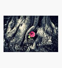 Lone Pink Flower Photographic Print