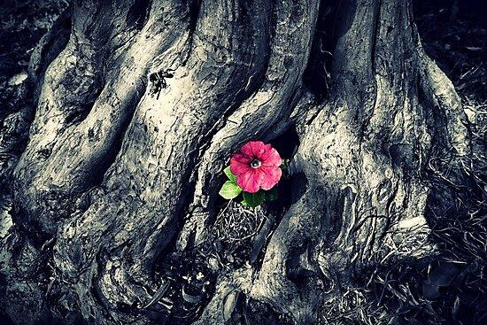 Lone Pink Flower by Paul Evans
