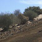 Motocross, California riders Vet X Racing Series - Cahuilla, CA by leih2008