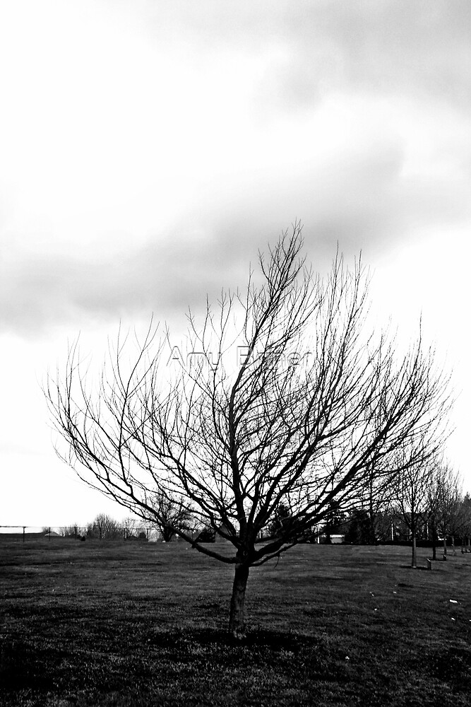 tree under the clouds by Amy  Briner