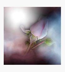 vintage rosebud Photographic Print