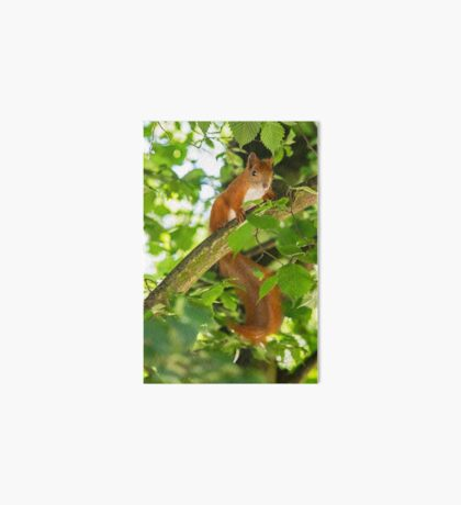 Red Squirrel Art Board