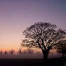 Trees by dougie1