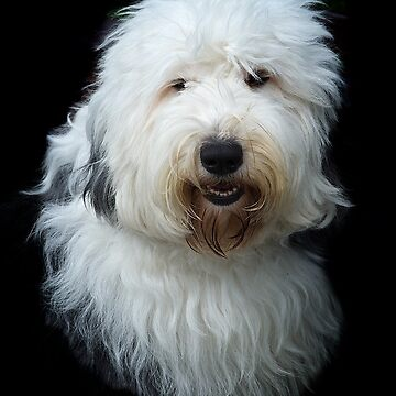 Old English Sheepdog by teapotore