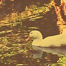 White Duck v.2 by tropicalsamuelv