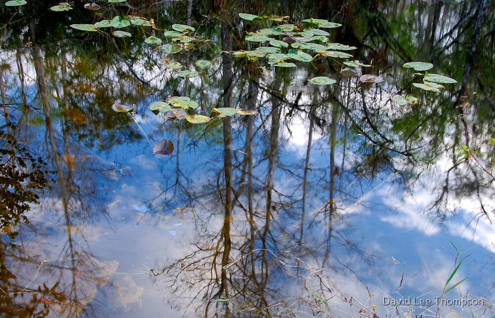 """""""Water Reflections"""" by David Lee Thompson"""