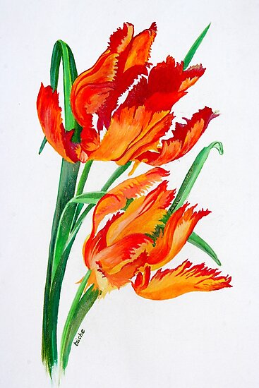 Bright Red Flamboyant Parrot Tulips by taiche