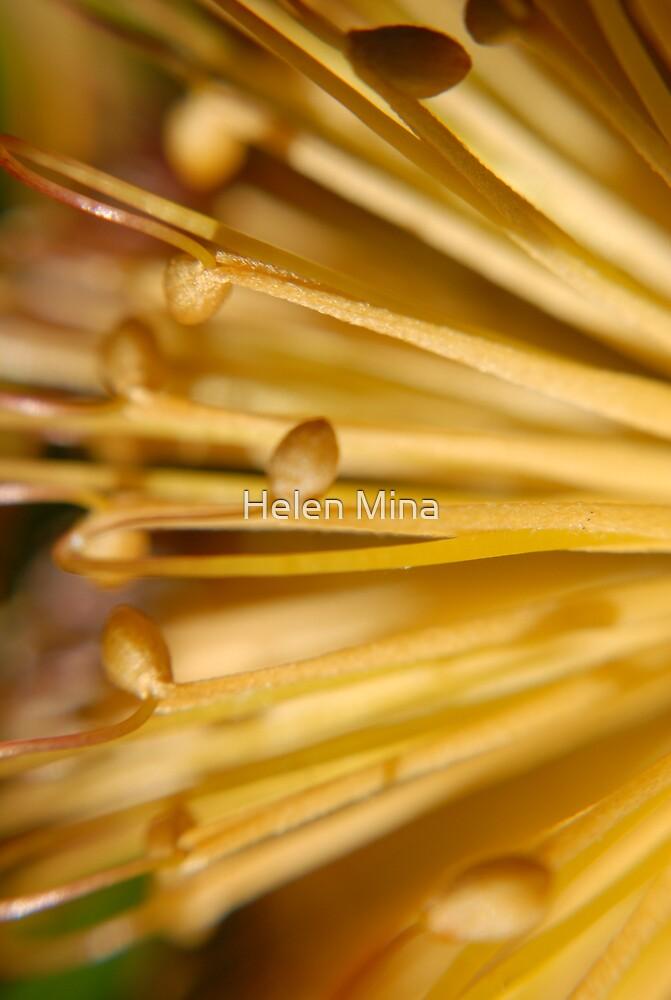 Flower Macro1 by Helen Mina