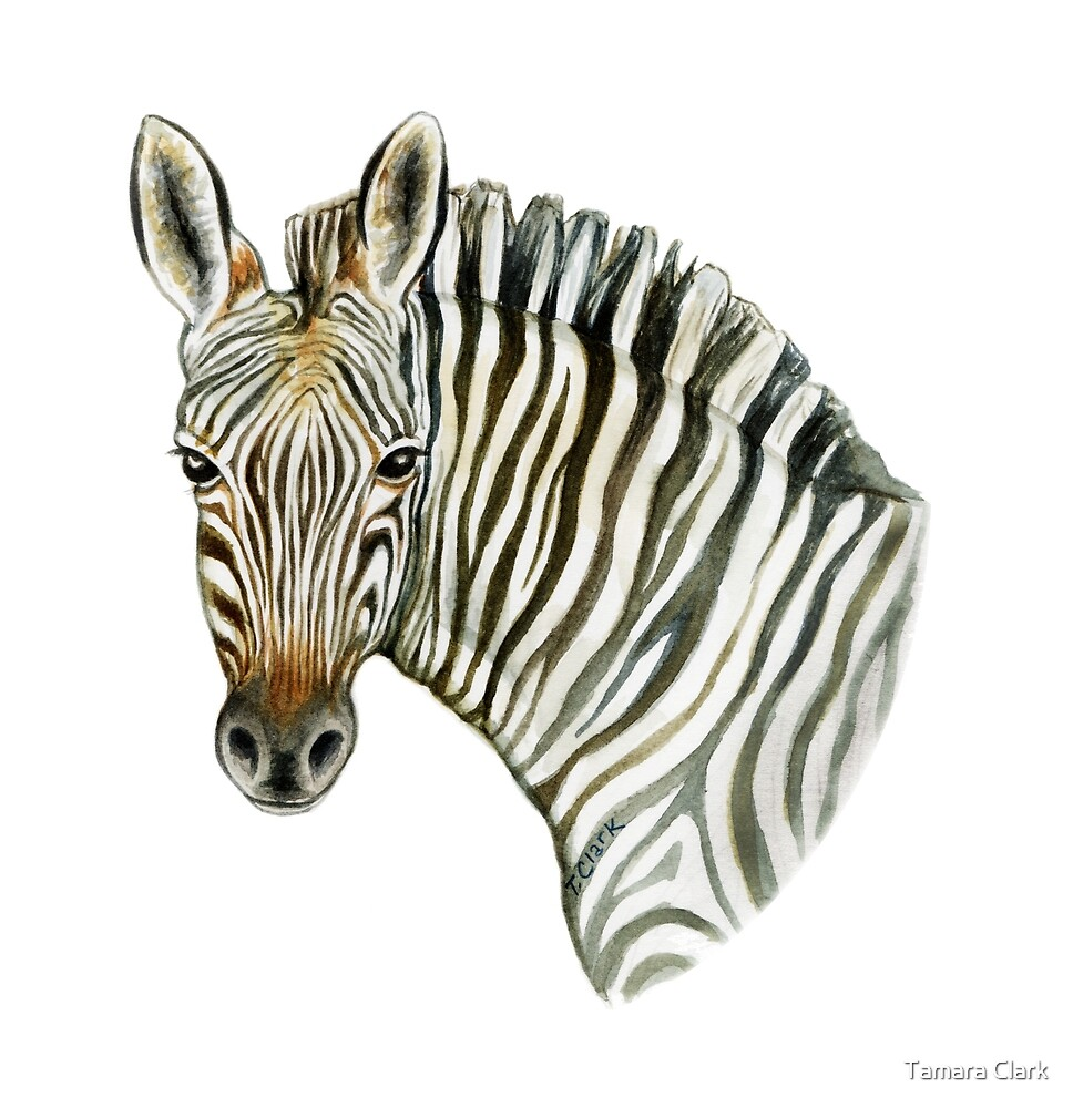 Mountain Zebra by Tamara Clark