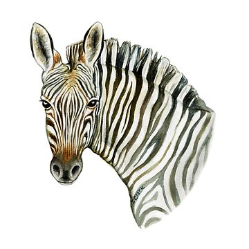 Mountain Zebra by edenart