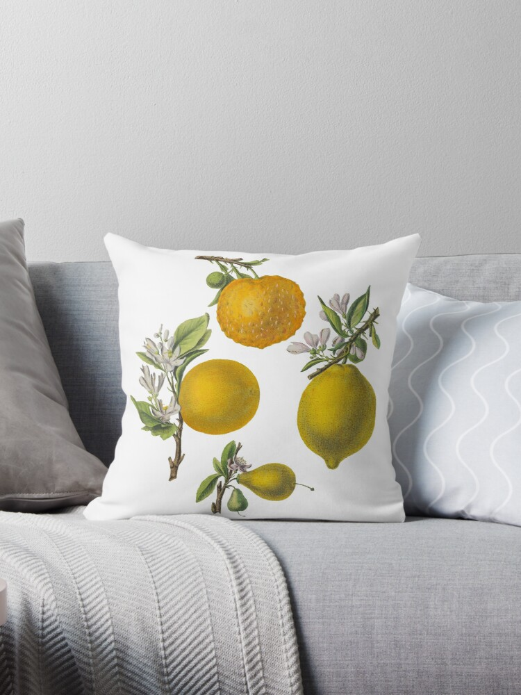 FF - Citrus and Oranges by imageresource