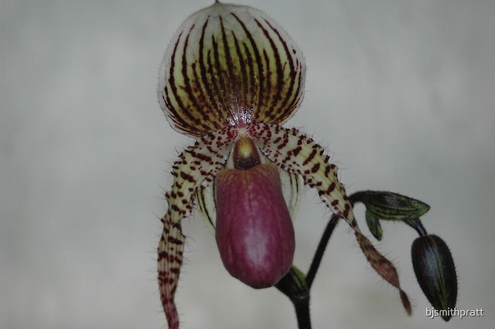 orchid by bjsmithpratt
