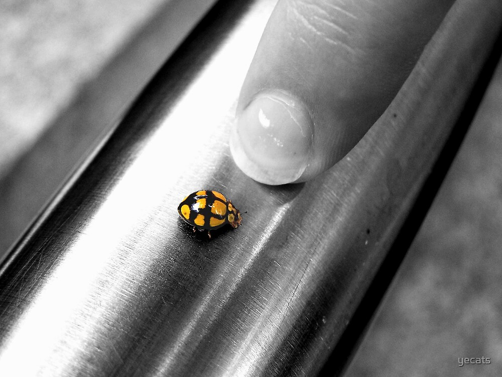 Lady bug by yecats