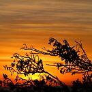 sunrise at Indented Head, Victoria, Australia by jarrodb