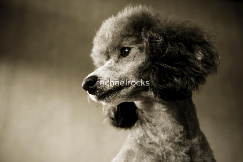 Poodle by rachaelrocks