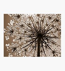 Just a Weed Photographic Print