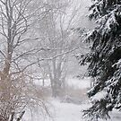 Day after the big snow... by Saulite2