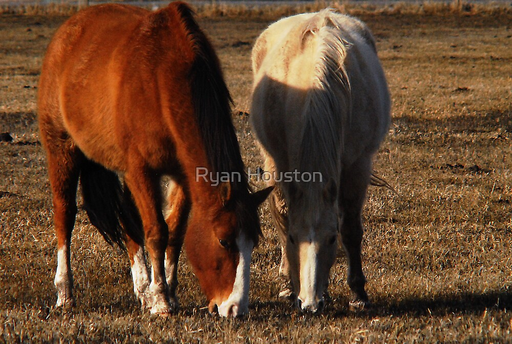 Grazing Together by Ryan Houston