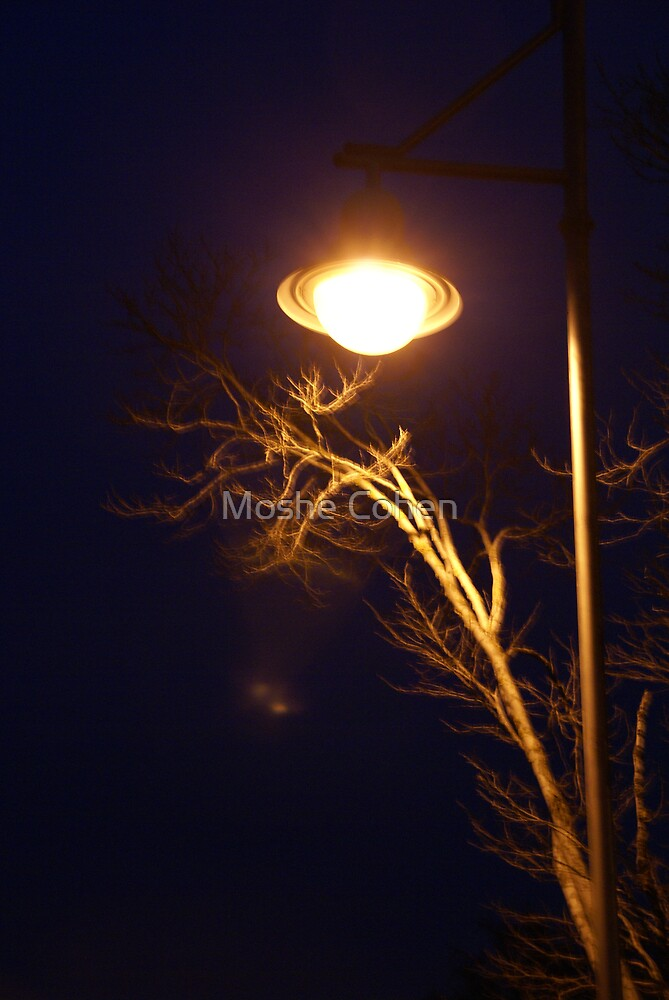 A tree and a street light at night by Moshe Cohen