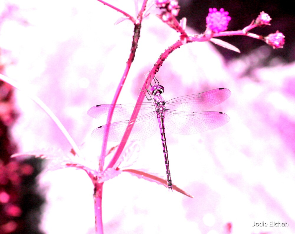 Pink Dragon fly by Jodie Elchah