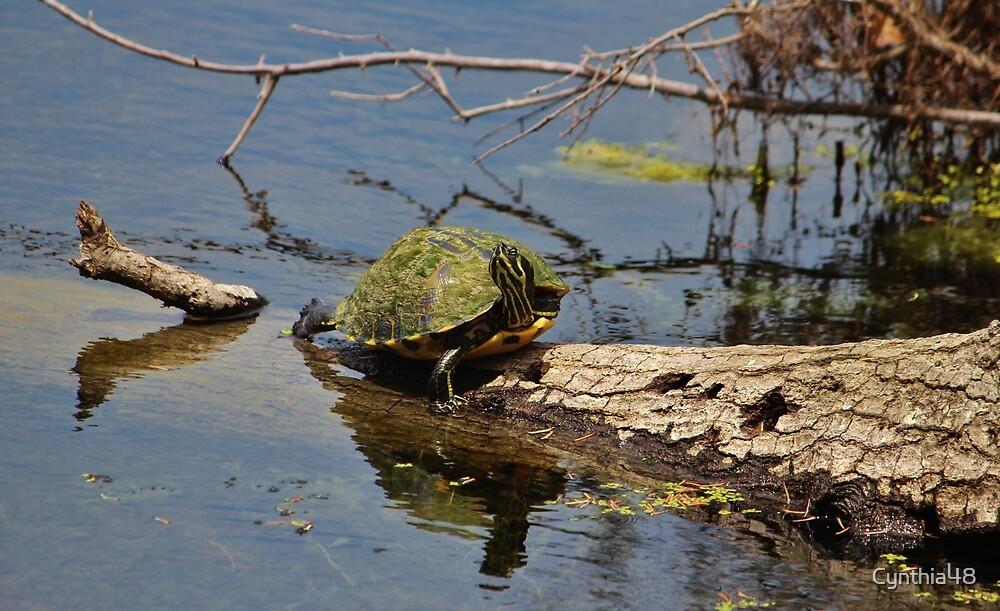 Turtle Stretch  by Cynthia48