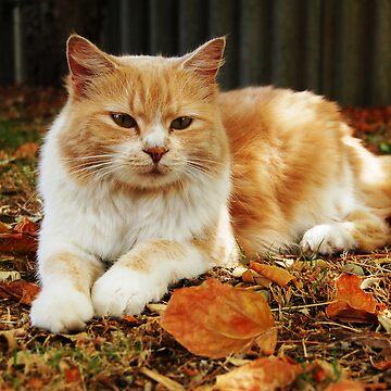 Autumn  by maverickchild