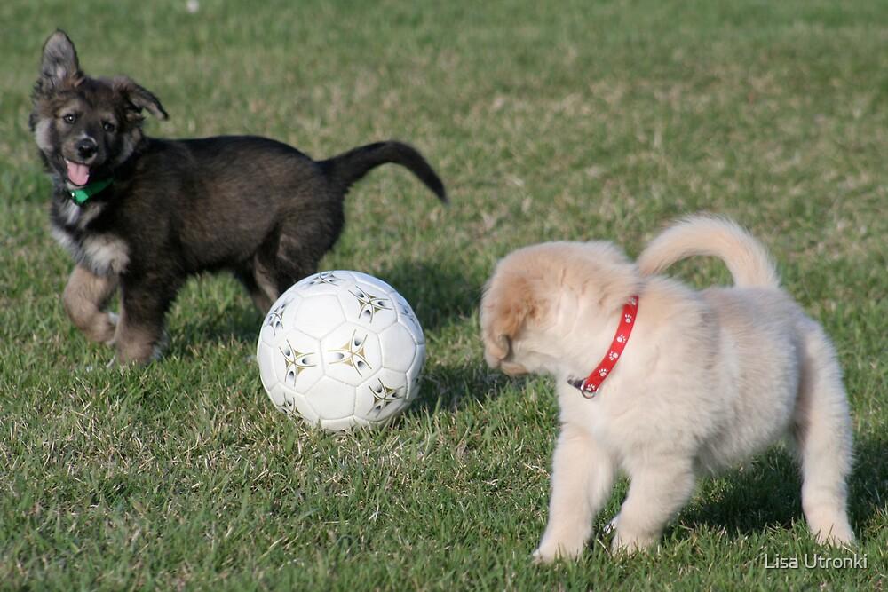 puppy play by Lisa Utronki
