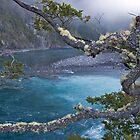 Lichen View by phil decocco