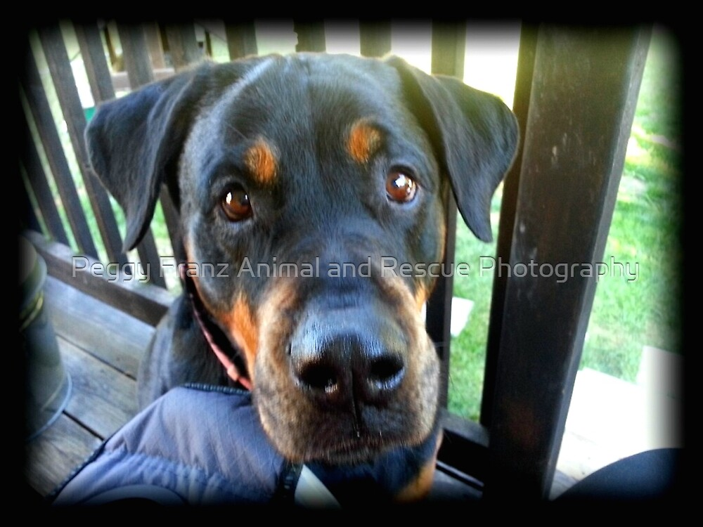 Special Girl  by Peggy Franz Animal and Rescue Photography