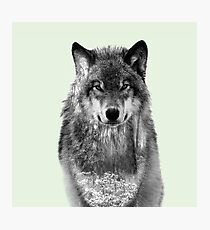 Snowy forest Wolf Photographic Print