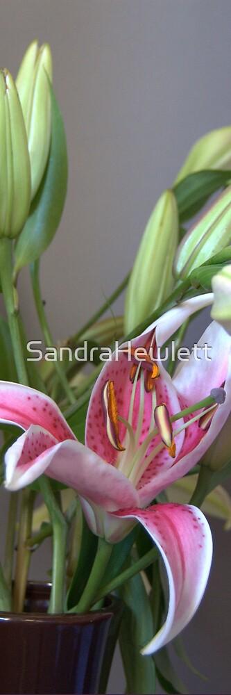 Lilly 2 by SandraHewlett