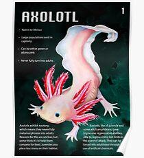 Axolotl Educational Print Poster
