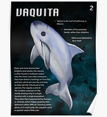 Vaquita Educational Print Poster