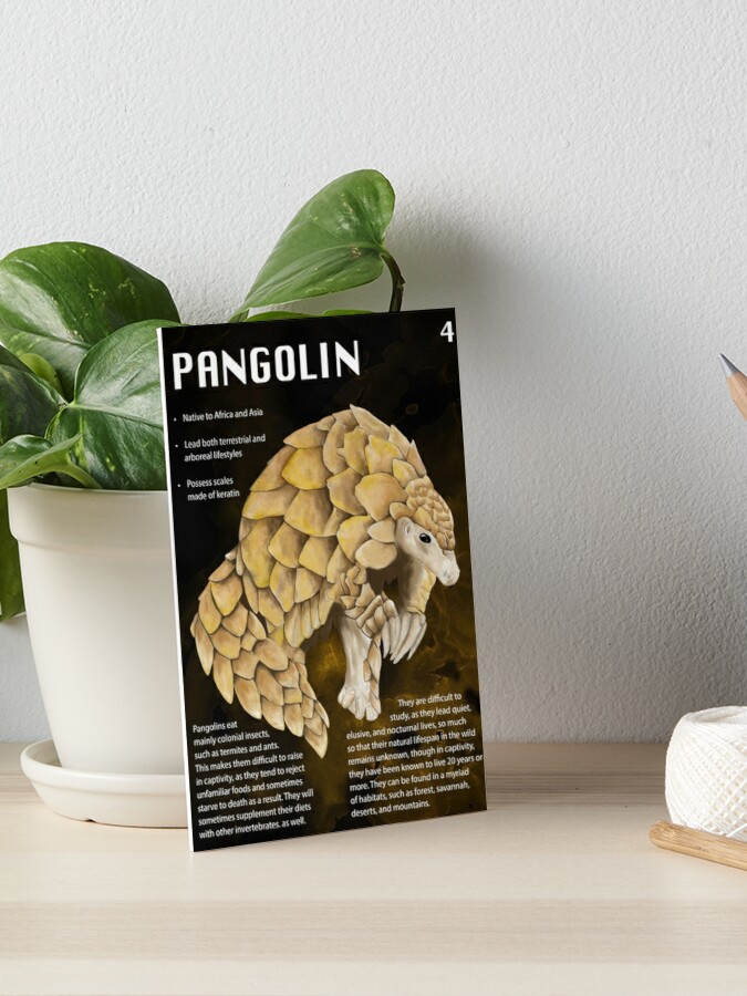 Pangolin Educational Print Art Board Print By Twstudio Redbubble