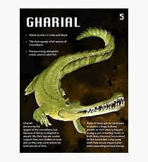 Gharial Educational Print Photographic Print