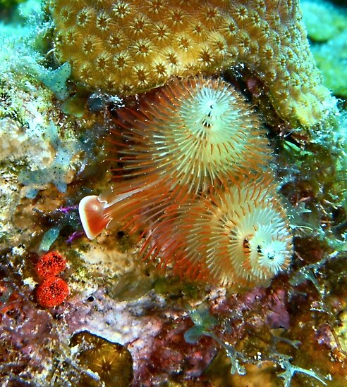 Christmas Tree Worm by Amy McDaniel