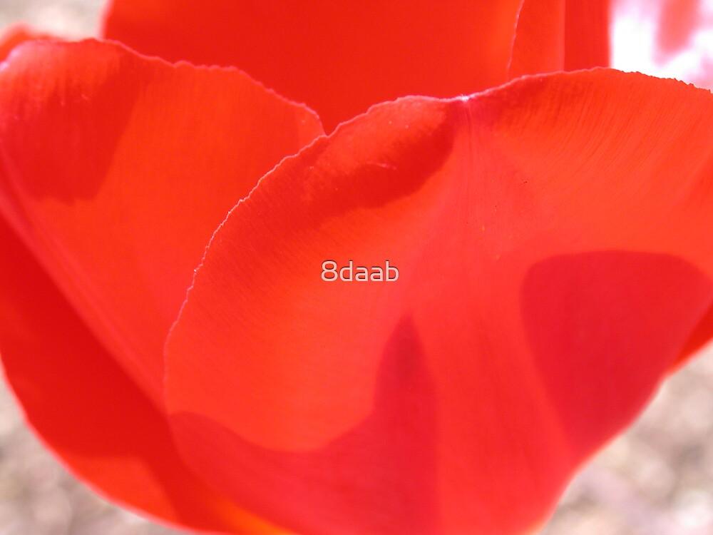 tulip red by 8daab
