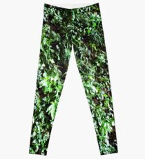 Muro Verde Leggings