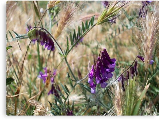 Field Flowers by demonkourai