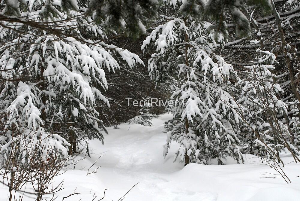 Enough Snow Yet? :) by TerriRiver