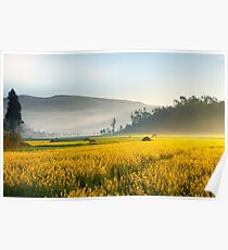 Yellow flowers landscape covered by mist in China. Poster