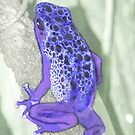 Poison Dart Frog by Lisa Putman