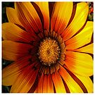 FloralFantasia 21 by Charles Oliver