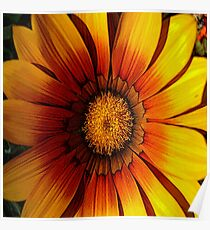 FloralFantasia 21 Poster