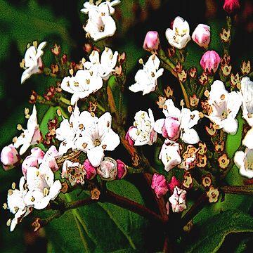 FloralFantasia 23 by oliverart