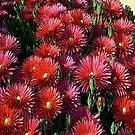 FloralFantasia 24 by Charles Oliver
