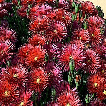 FloralFantasia 24 by oliverart