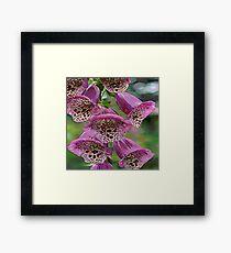 FloralFantasia 25 Framed Print